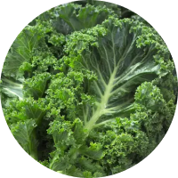 You are currently viewing Kale