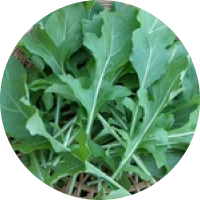 Read more about the article Arugula